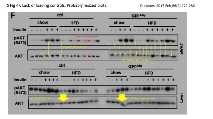 On Western blot loading controls: lessons from Richard Moriggl lab