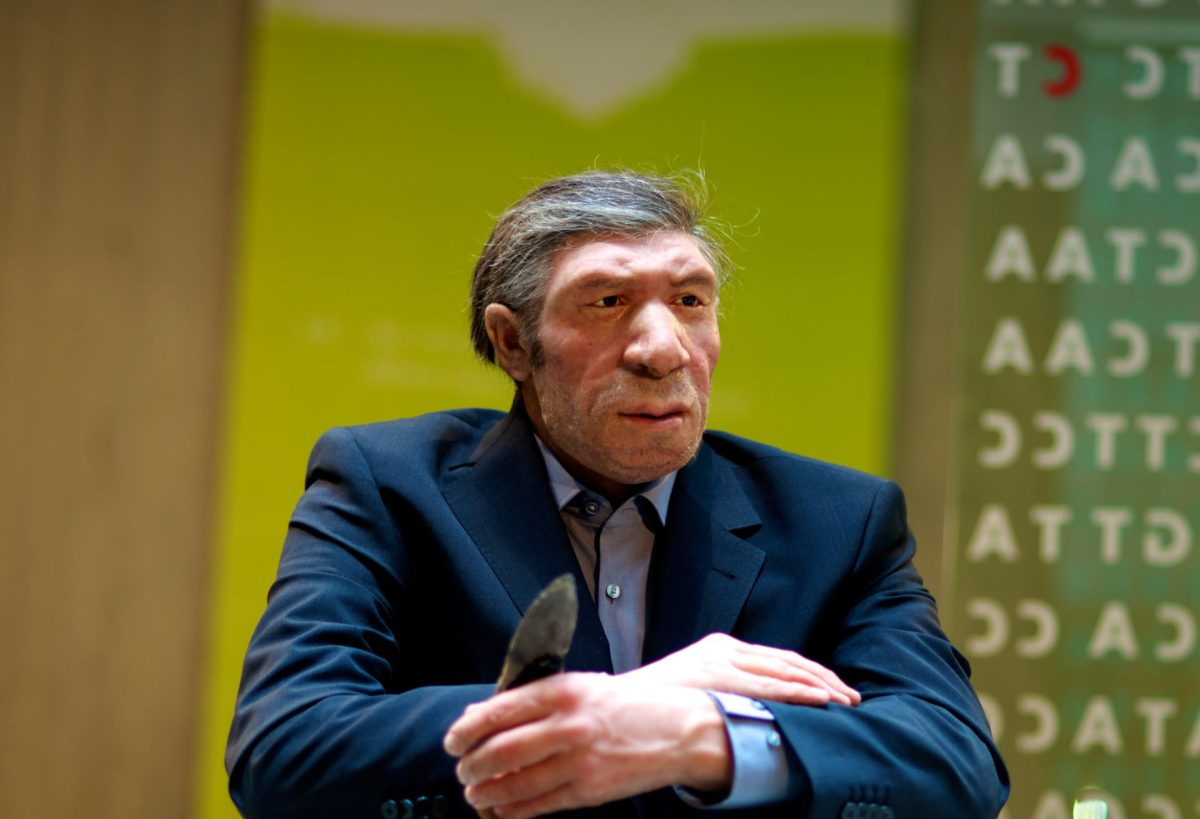 The anti-social mini-brains of Neanderthals