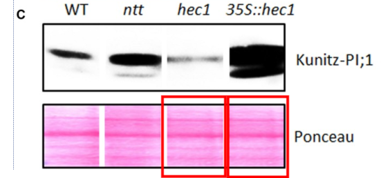 screenshot-www.ncbi.nlm.nih.gov-2018.09.25-11-45-15