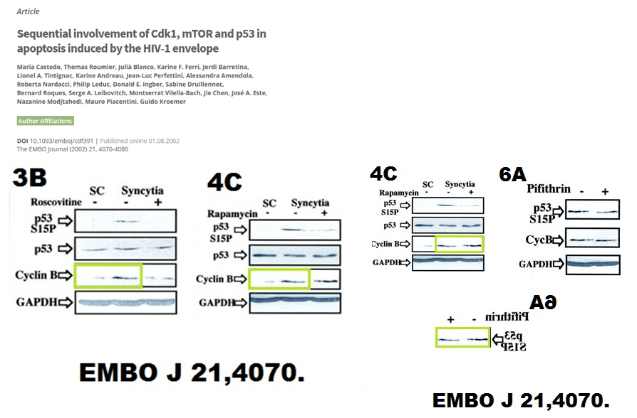 kroemer-embo-j.png
