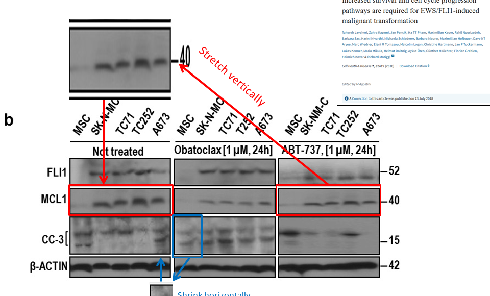 Western blot loading control libraries and beyond – For Better Science