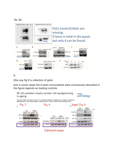 Lopez-Otin and Daley retract Nature Cell Biology paper – For Better