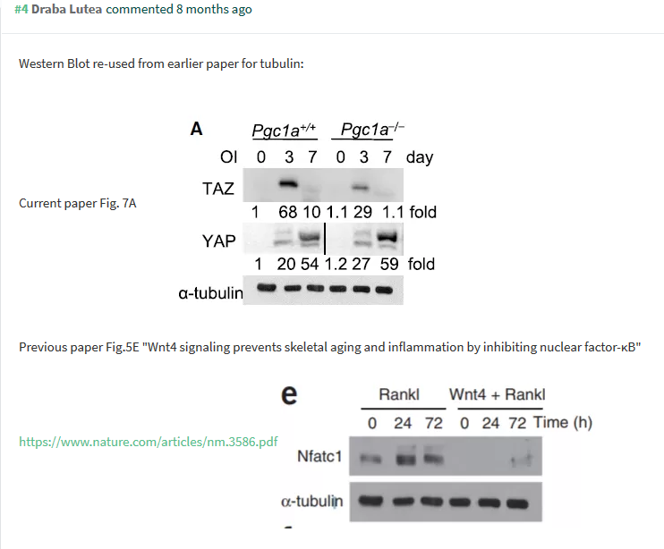 Screenshot_2019-05-02 PubPeer - PGC-1α Controls Skeletal Stem Cell Fate and Bone-Fat Balance