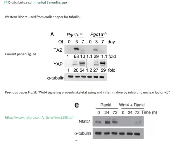 Screenshot_2019-05-02 PubPeer - PGC-1α Controls Skeletal Stem Cell Fate and Bone-Fat Balance